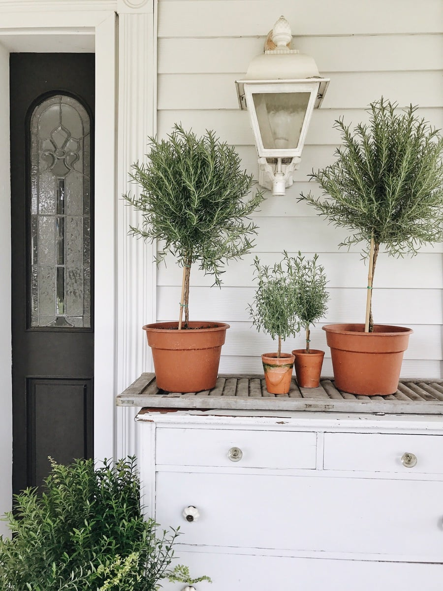 How To Have A Green Thumb – Caring For your Plants