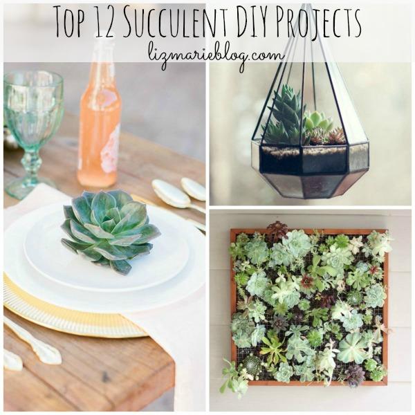 Top 12 succulent DIY Projects