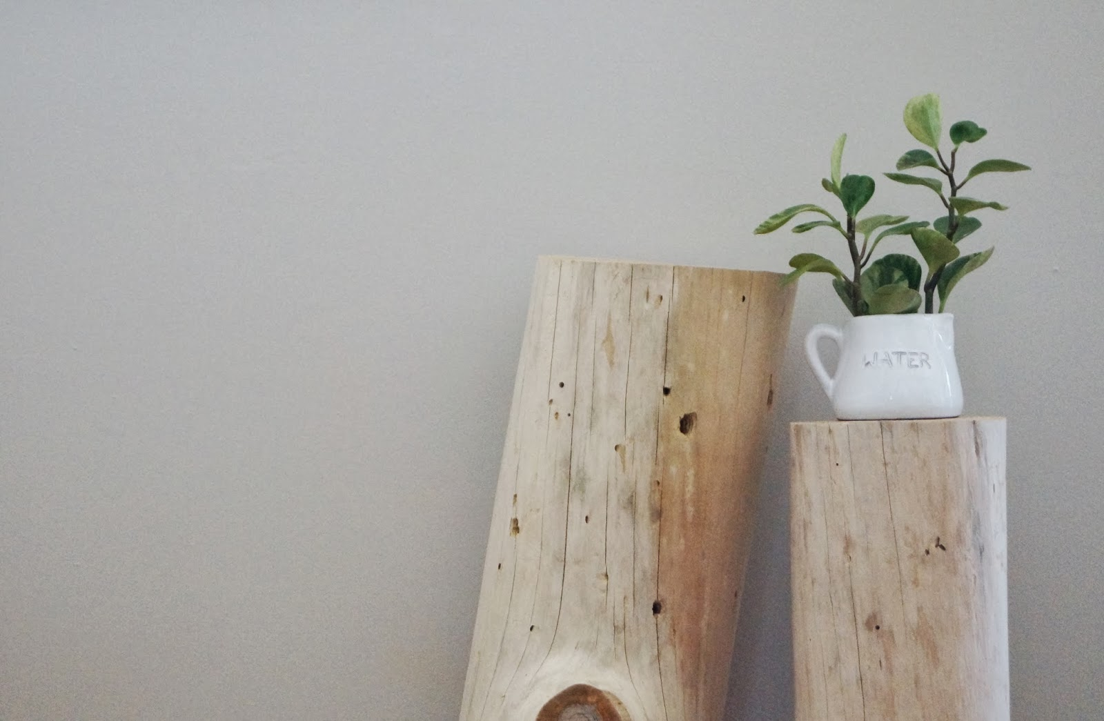 Bleached Tree Stump (7)