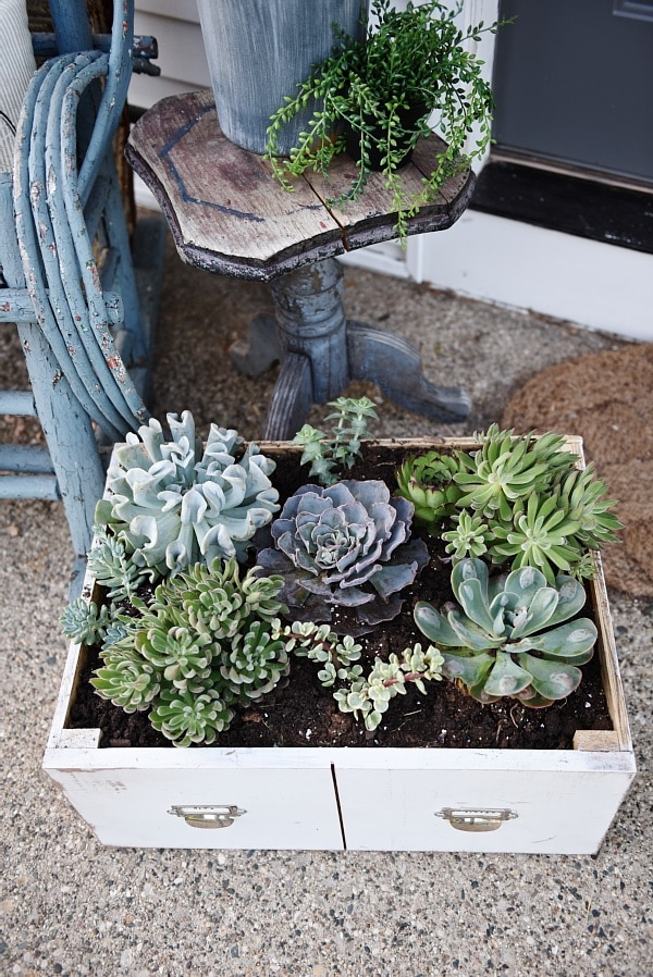DIY succulent drawer, DIY Succulent Drawer