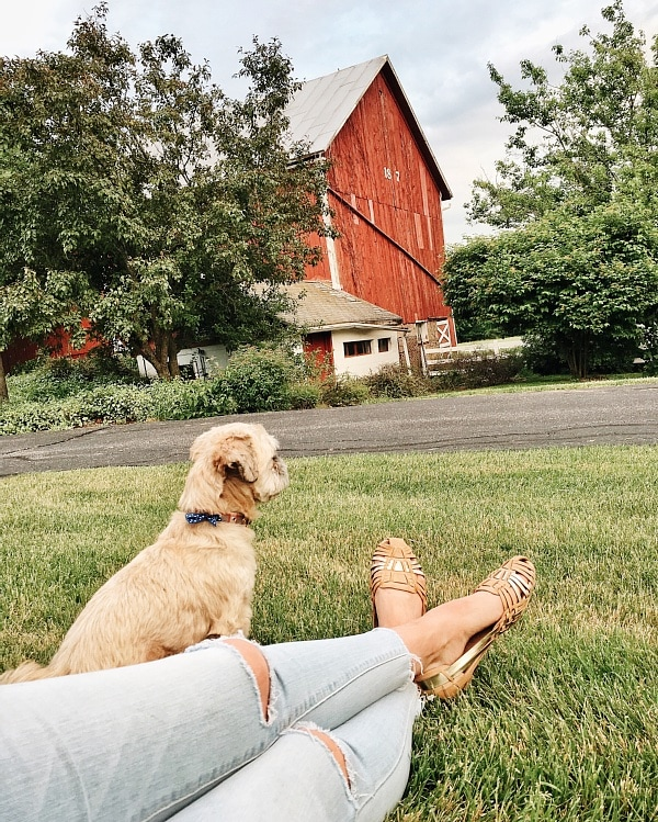 Farmhouse, We Are Moving!! Updates On Our New Farm Life.