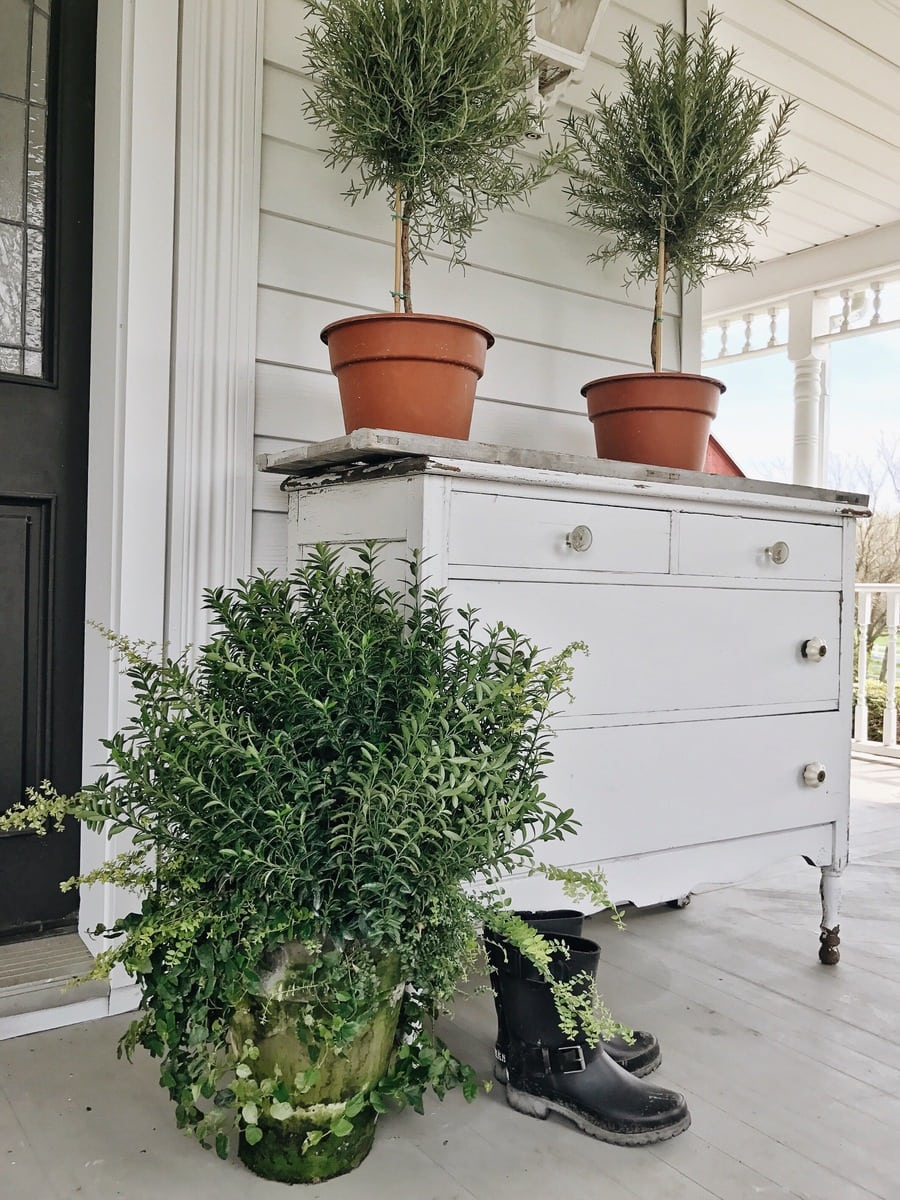, How To Have A Green Thumb – Caring For your Plants