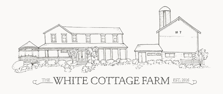 , White Cottage Farm One Year Anniversary – Progress Update!
