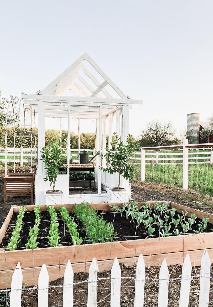 DIY Greenhouse Garden Shed