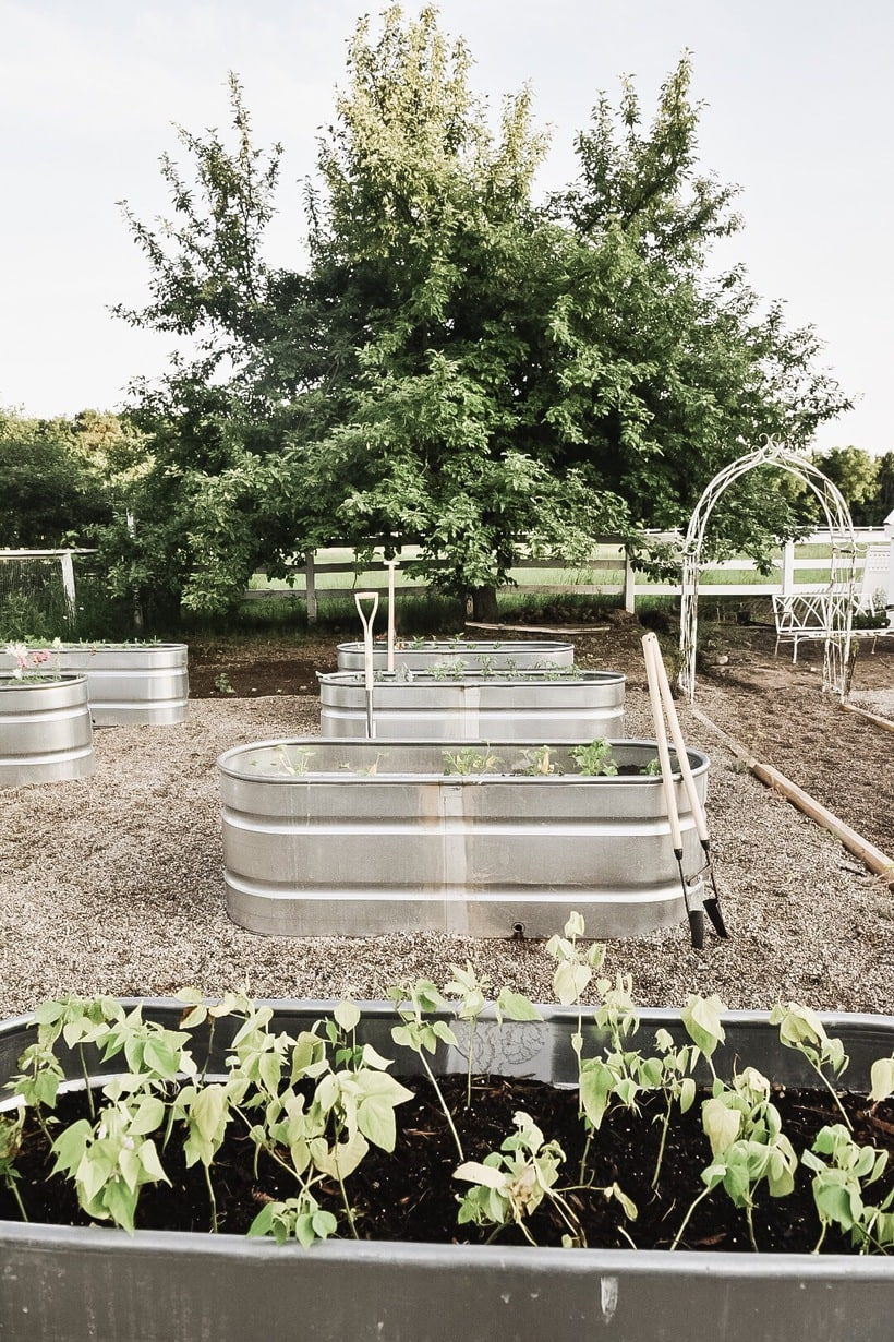 Why We Chose Raised Garden Beds- Stock Tank Garden Beds Pros & Cons