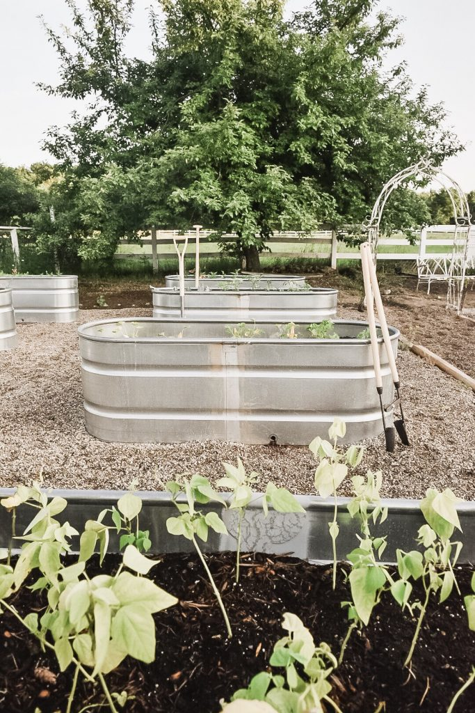 Why We Chose Raised Garden Beds Stock Tank Garden Beds Pros Cons Liz Marie Blog