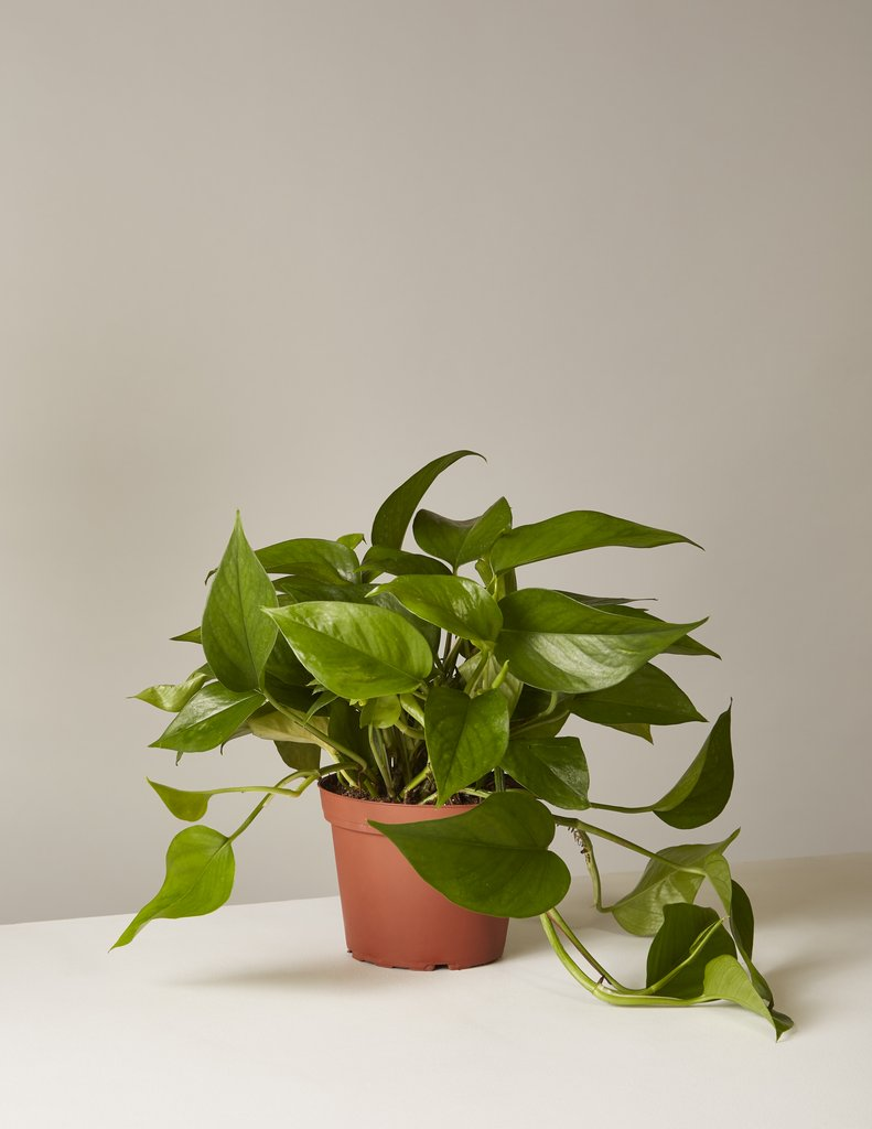 How To Get Houseplants Delivered To Your Home