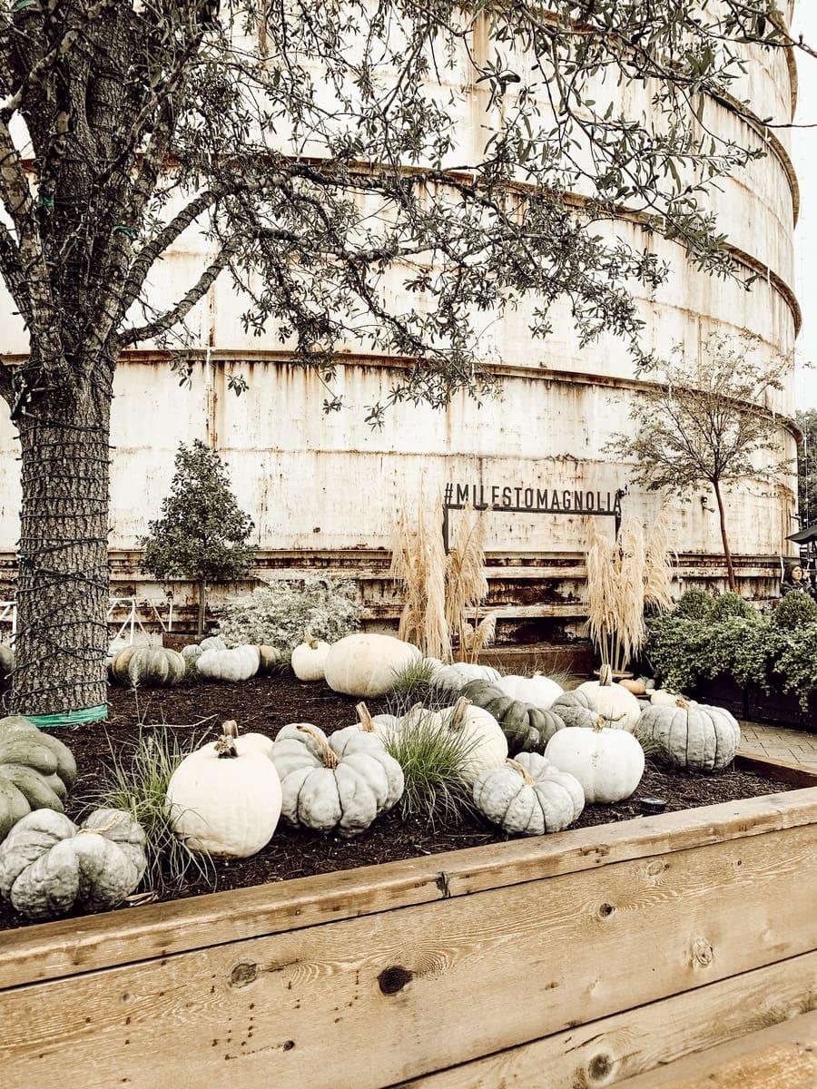 Silobration 2018 – Magnolia Market With Kilz