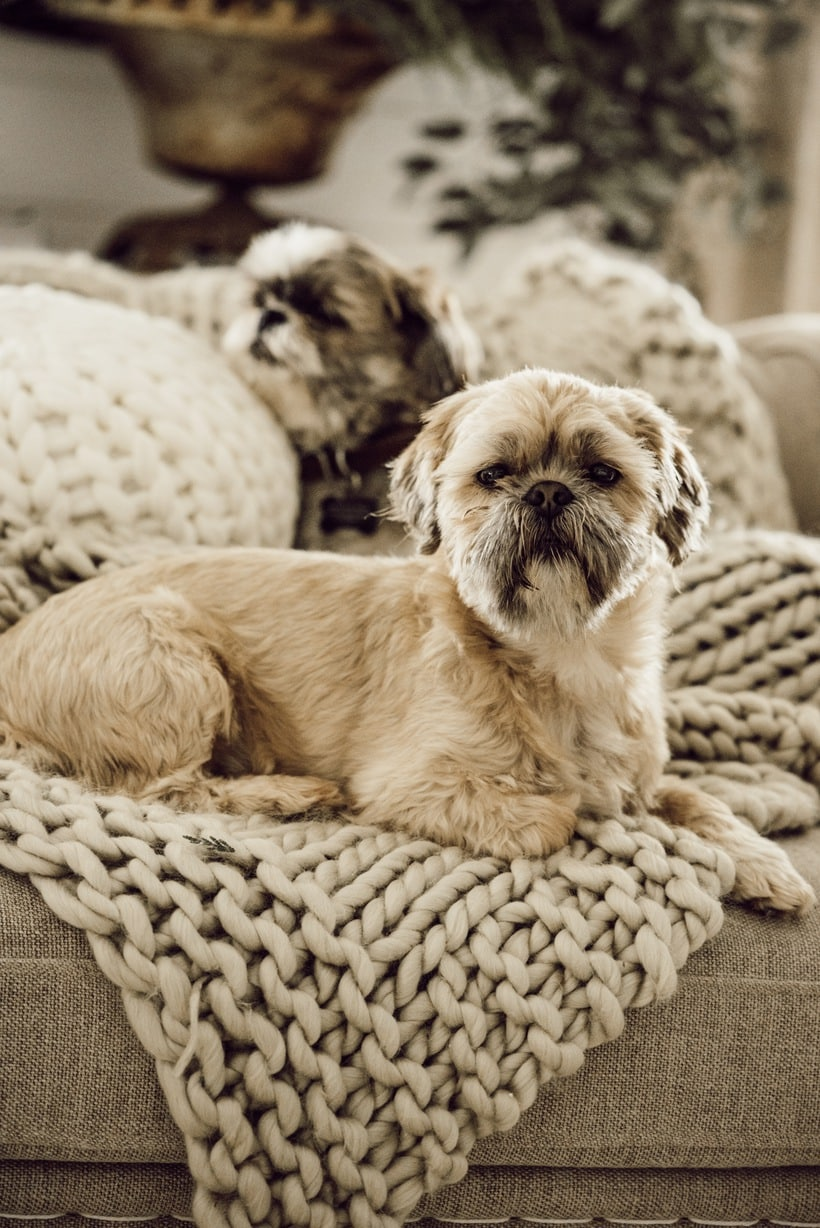 Snuggle Up dogs in this cozy winter living room