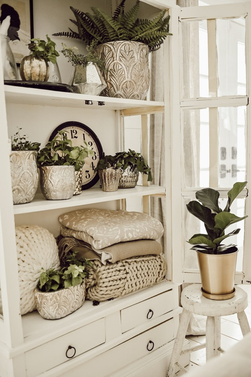 Bookcase with Plants and Blankets