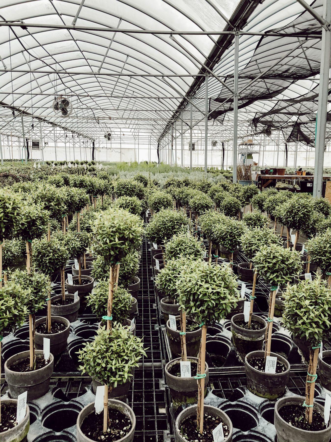 Michigan Greenhouse