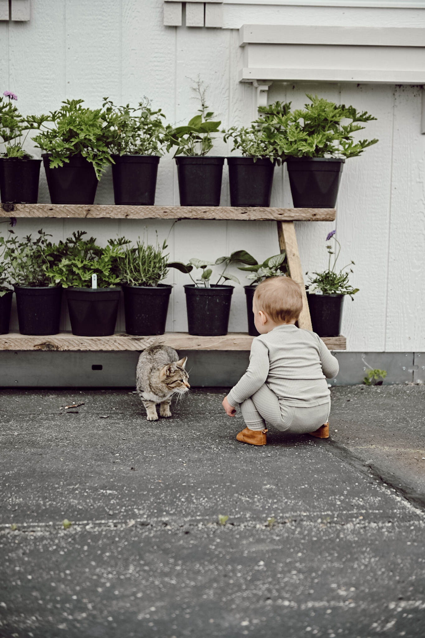 little boy with cat infant of greenhouse with plants