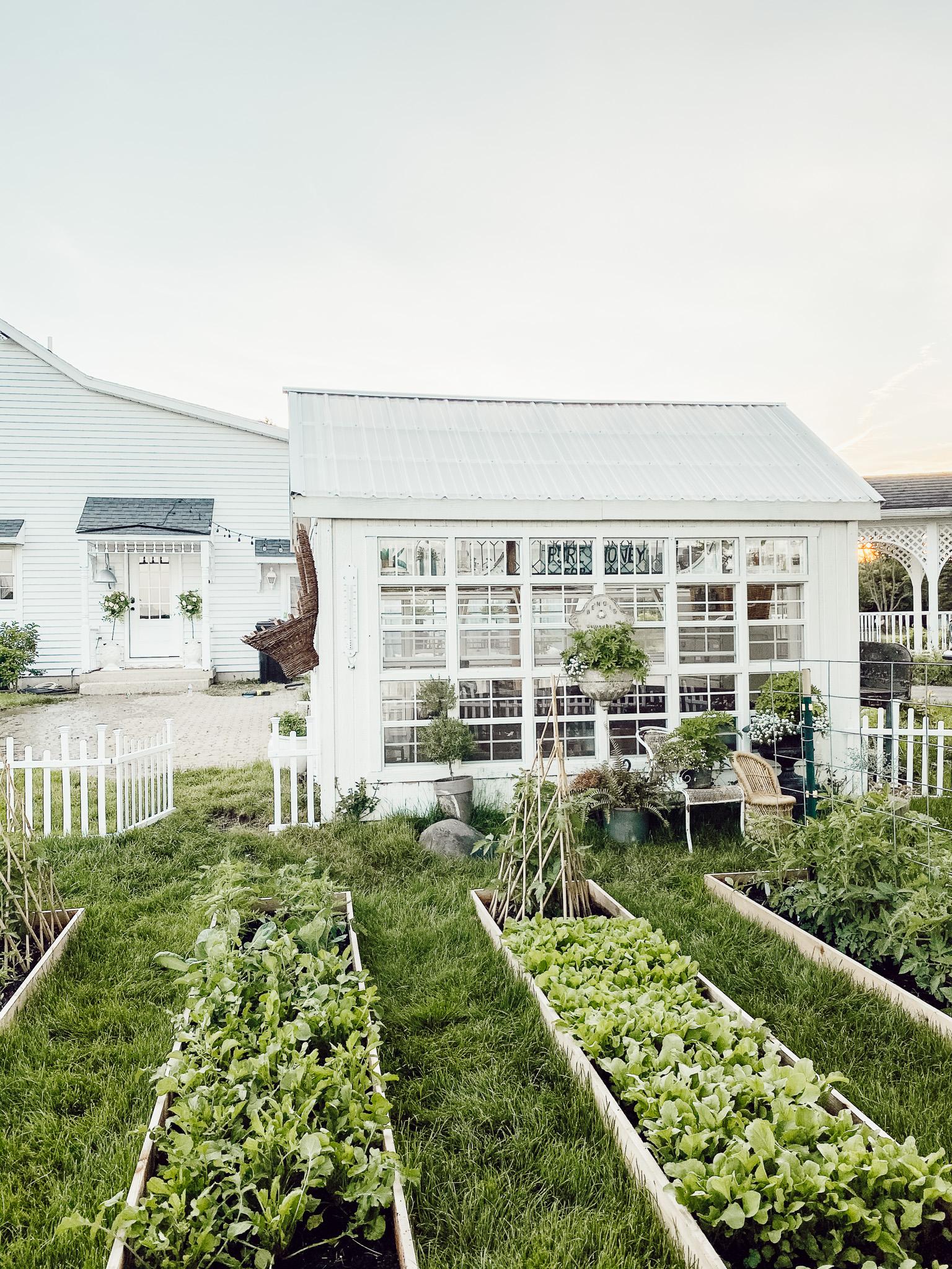 Veggie Garden Q&A